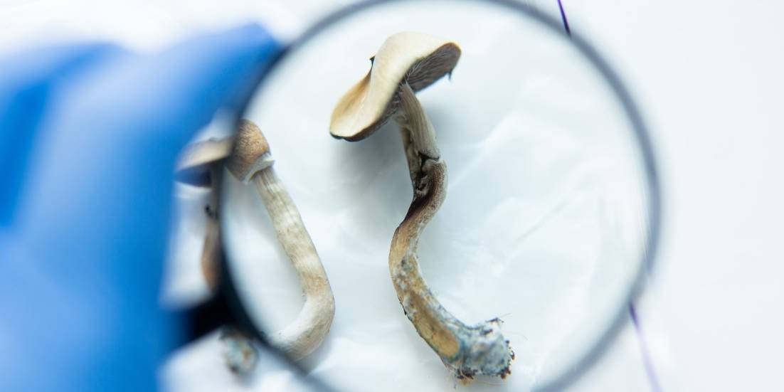 4 Canadian patients approved for psilocybin therapy
